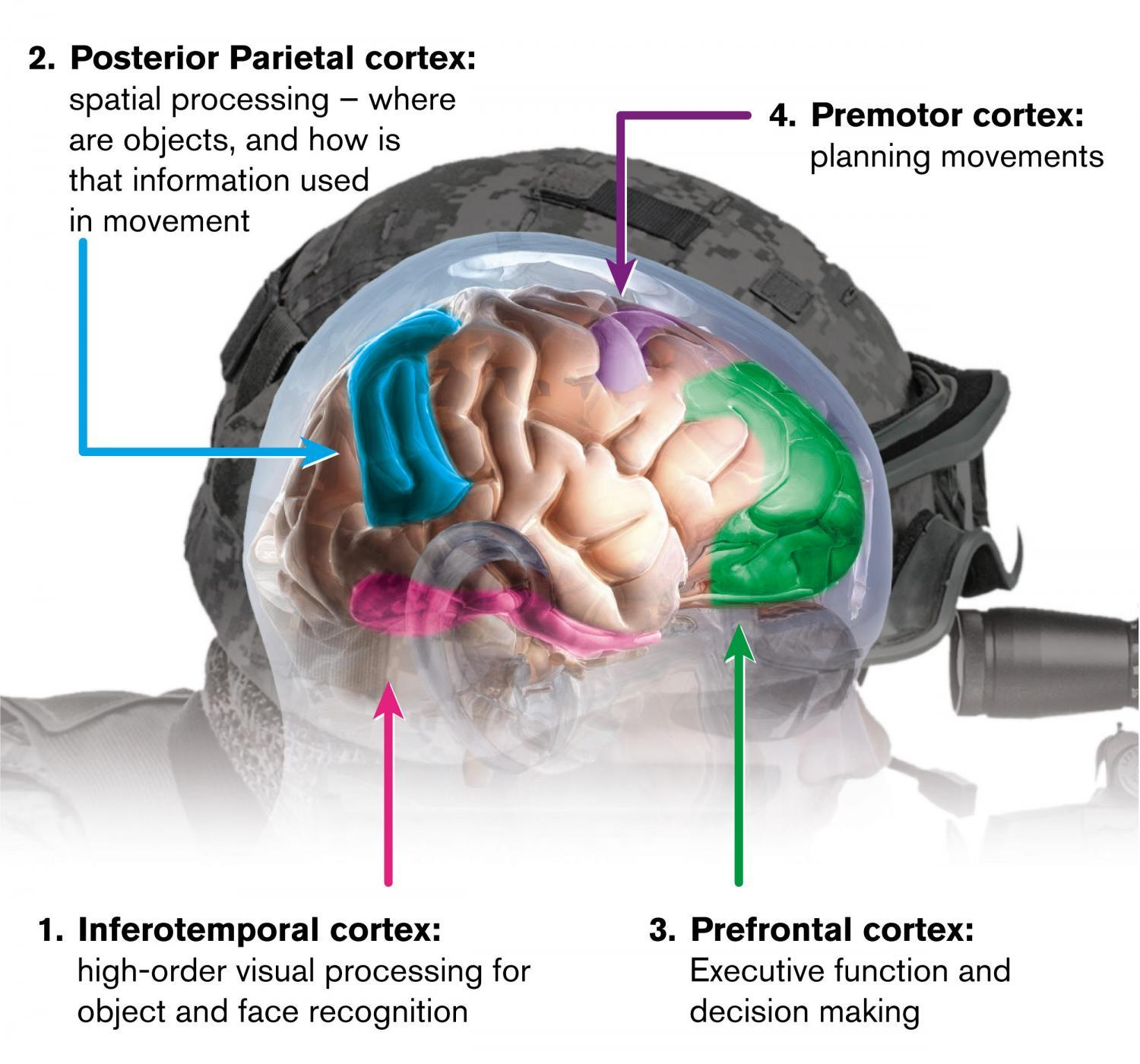 Us Department Of Defense Brain Study Seeks To Boost Learning In