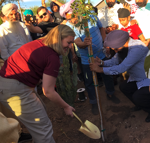 Phoenix Mayor Kate Gallego plants one of the 550 trees donated by members of the Phoenix Sikh community  on Nov. 10, 2019, in honor of the 550th anniversary of the birth of the founder of their religion, Guru Nanak.