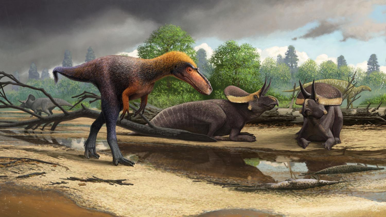 Reconstruction of the tyrannosauroid Suskityrannus hazelae