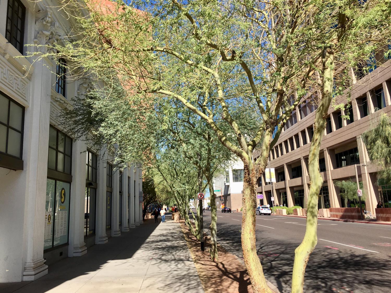 trees in Phoenix