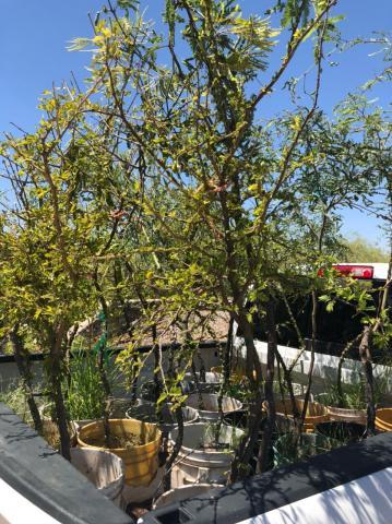 trees for Reto 1001 Arboles