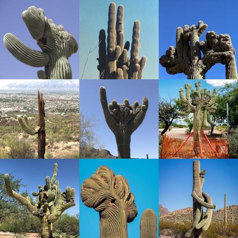 saguaro cactus collage