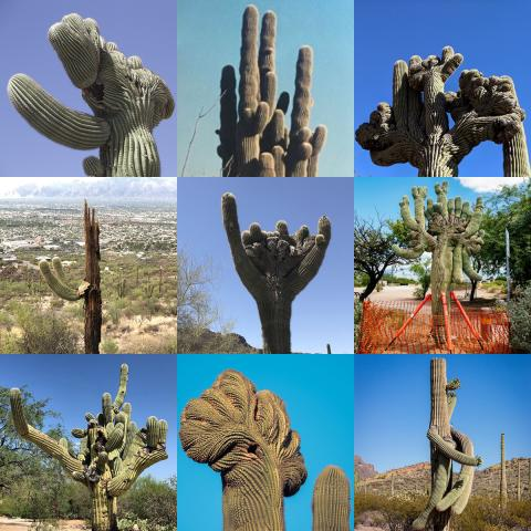 saguaro cactus collage
