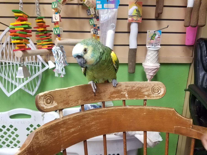 buddy the bird