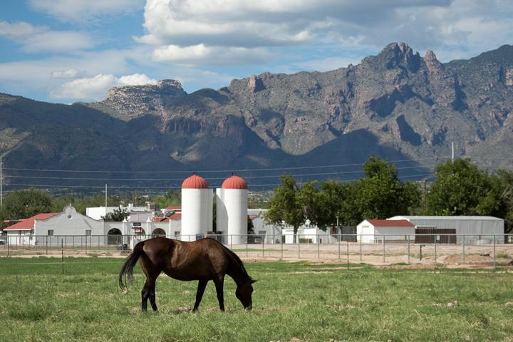 University of Arizona farm