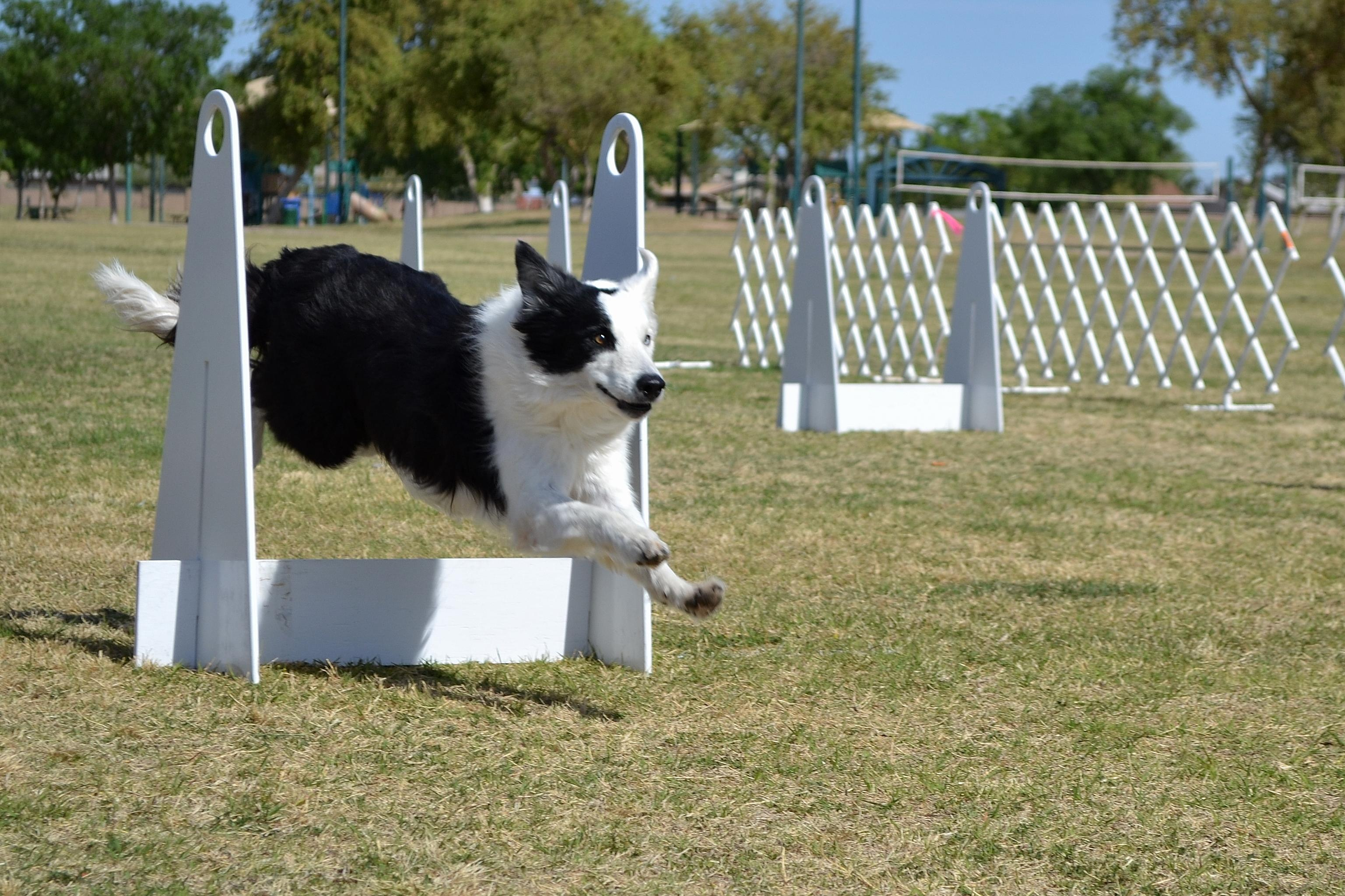flyball jump