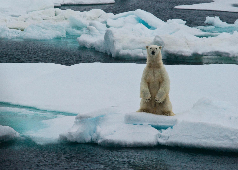 polar bear photo by Cristina Mittermeier