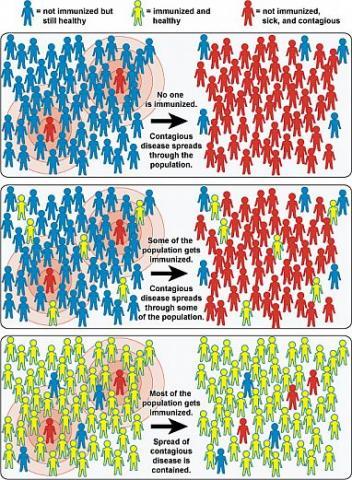 immunity chart