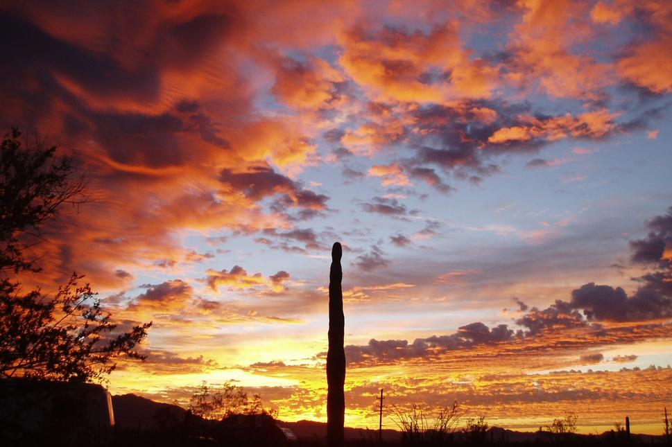 A beautiful sunset at Organ Pipe National Park