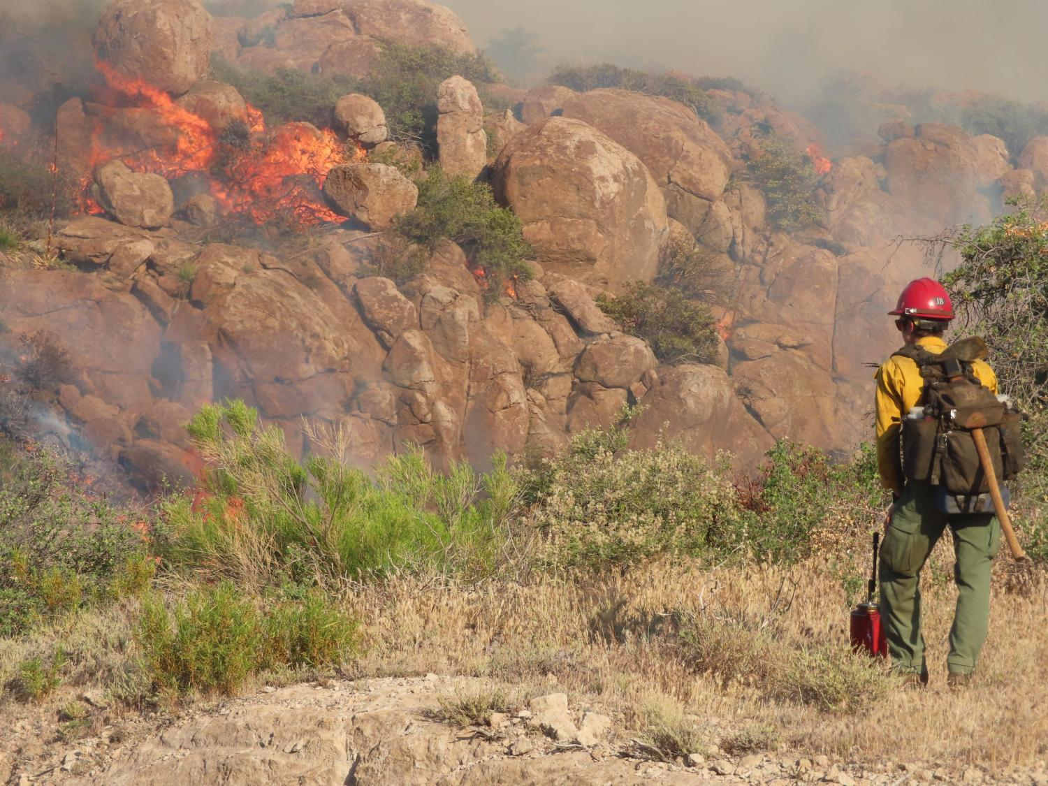A firefighter monitors a burnout operation in the Telegraph Fire