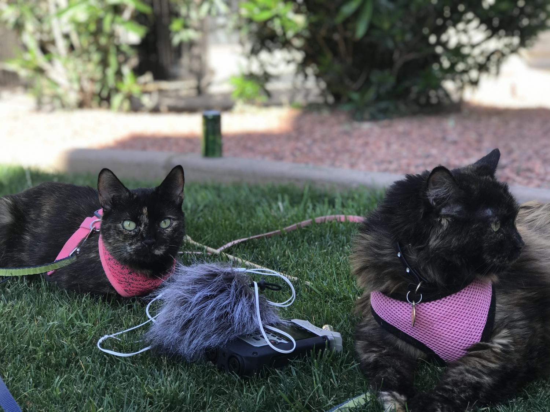 Cats Josette and Antigone