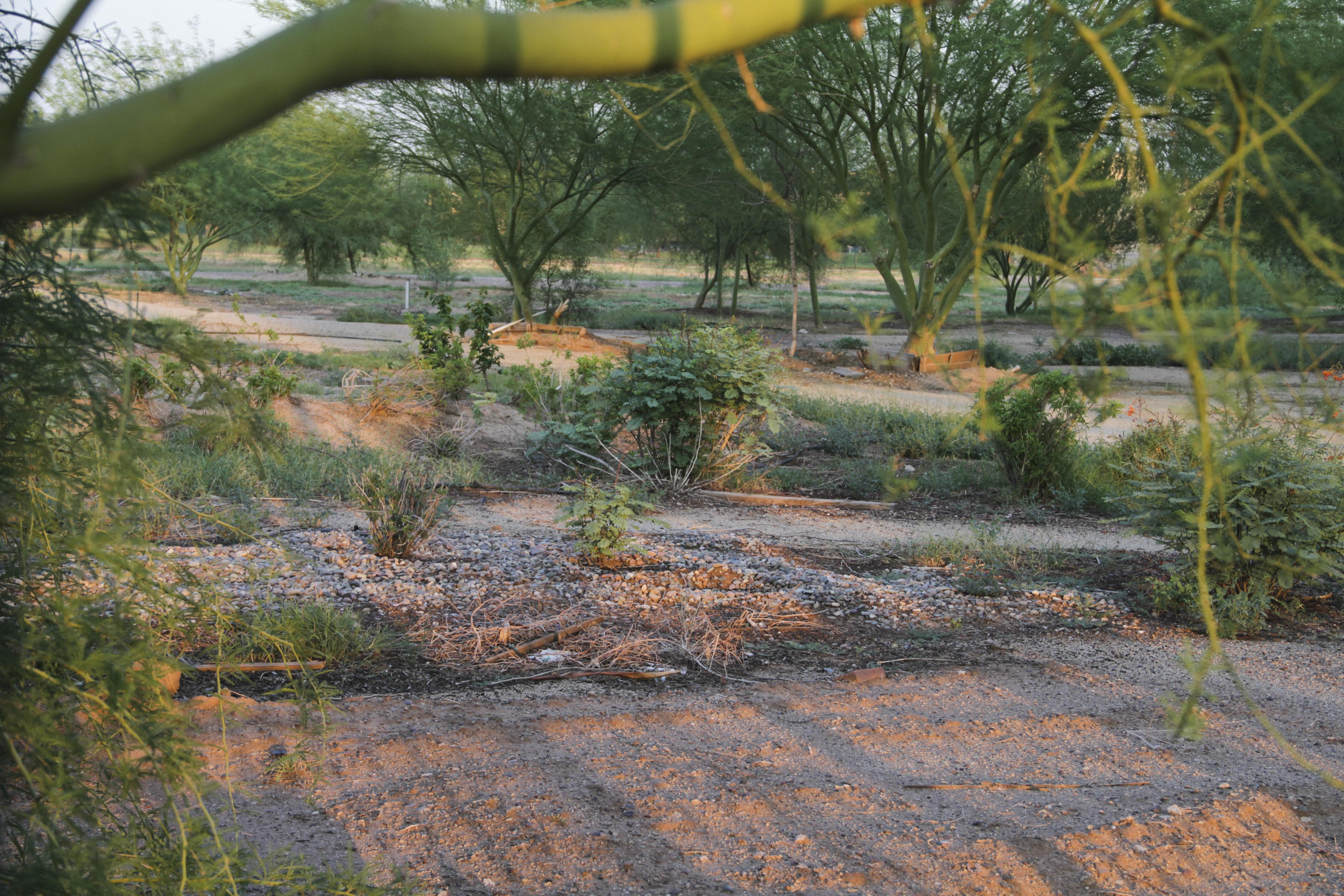 vacant community garden land