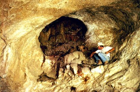 Pleistocene packrat midden