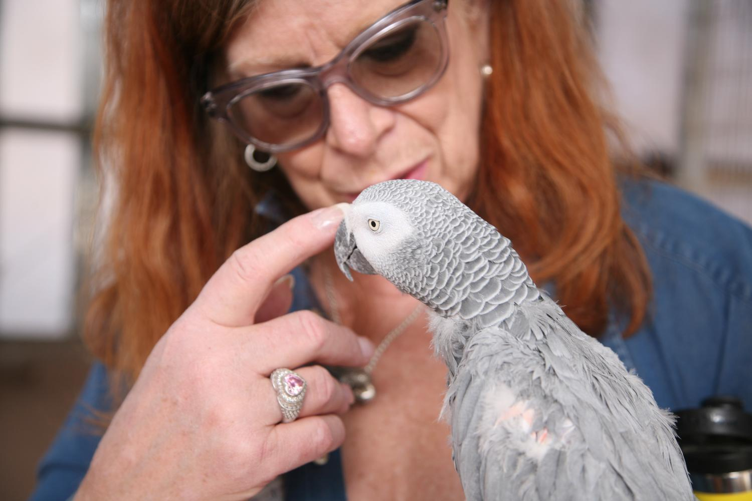 Pat Rudikoff and Cupid the Congo Grey Parrot