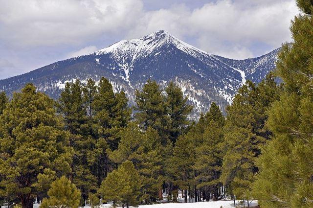 ponderosa pine forests