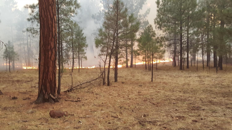 Rattlesnake Fire