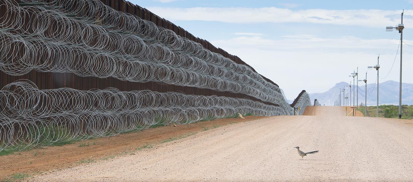 roadrunner at border wall