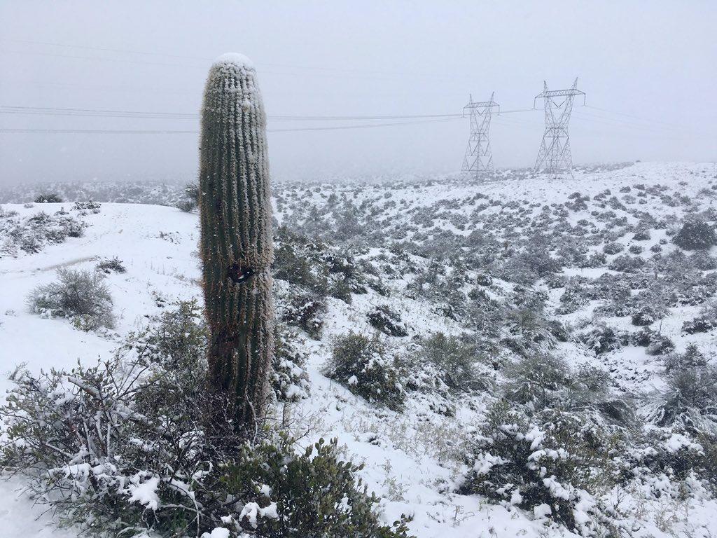 Snow on a saguaro