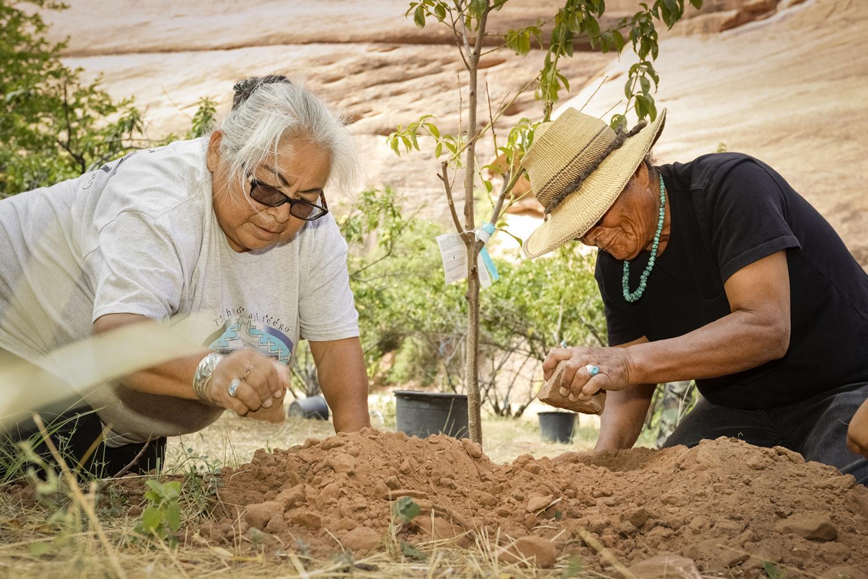 Planting peaches Canyon de Chelly