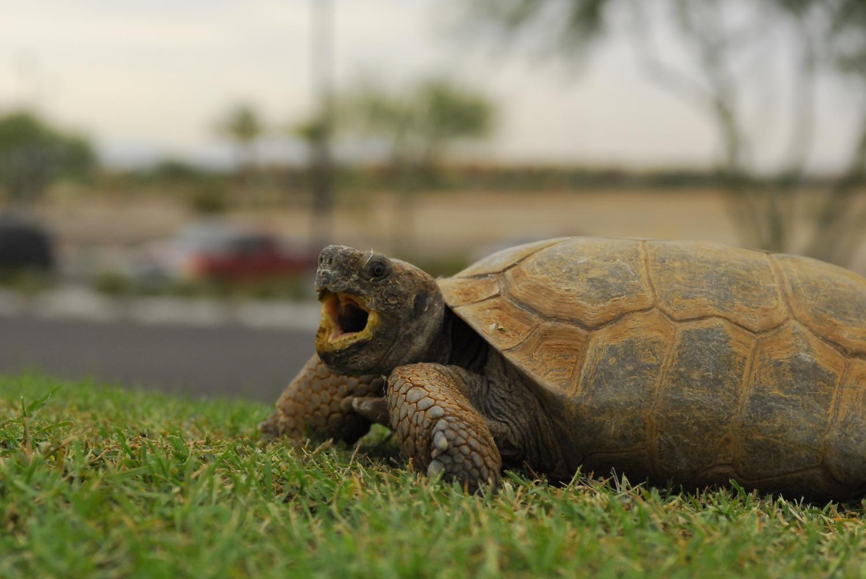 close up of tortoise