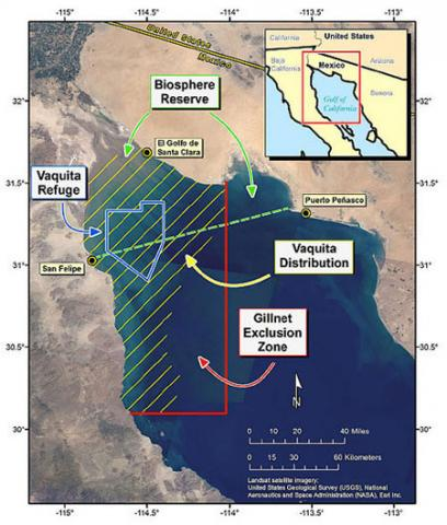 vaquita refuge map