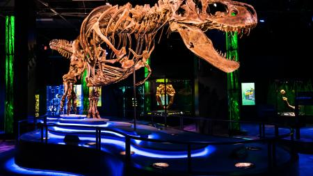 The T. rex named Victoria