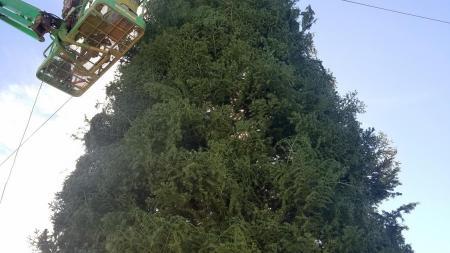 Arizona's tallest Christmas tree