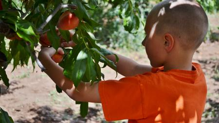 Kaiden Livingood picking a peach