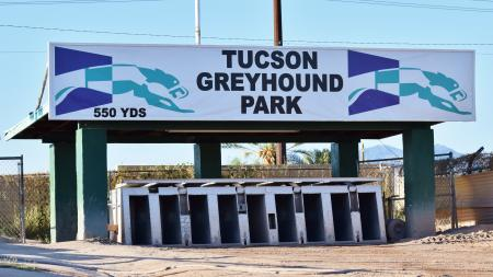 Tucson Greyhound 9