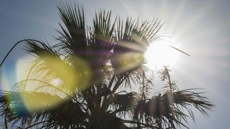 The Arizona sun behind a palm tree