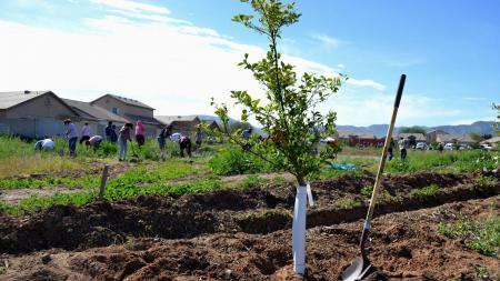 volunteers plant trees