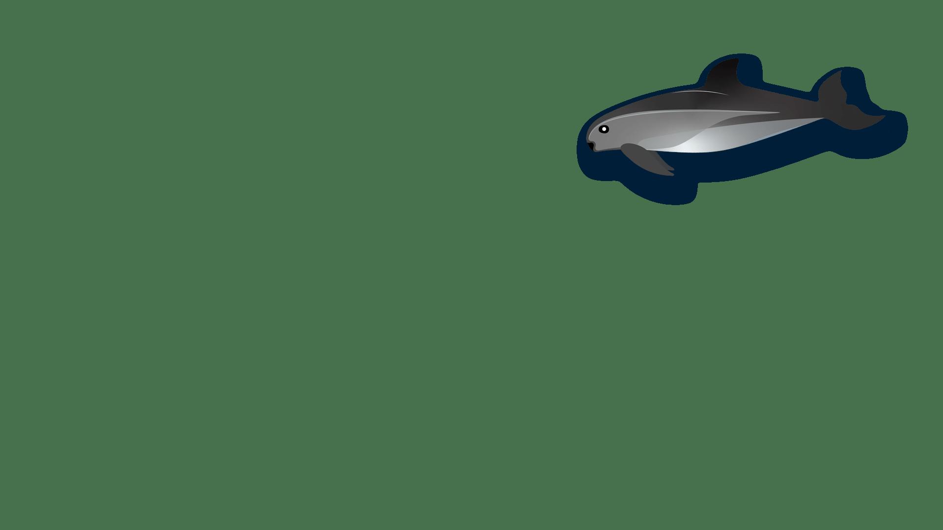 The Struggle To Save Vaquitas The World S Rarest Marine Mammal Kjzz